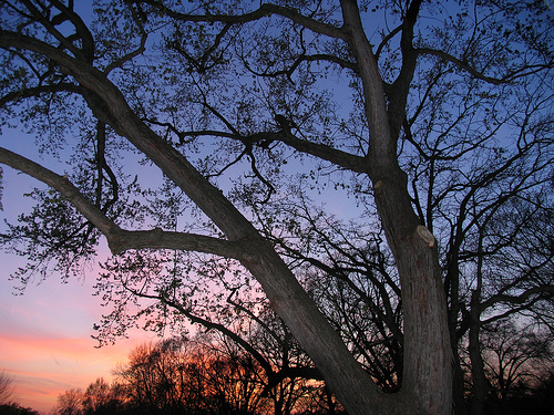 Understanding the Concept of Physical Earth-ship