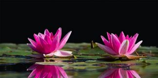 Reiki healing with peace mantras