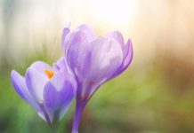 Reiki Spring Cleaning