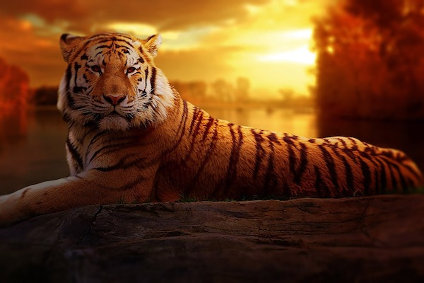 Reiki Tiger Power