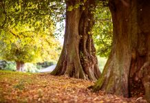 Reiki With Inspiration from a Tree