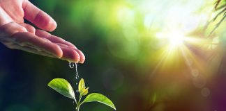 The Importance of the Role of the Reiki Master