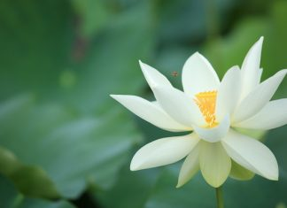 The Jewel Is In the Lotus - Number 44