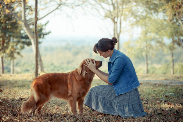Animal Reiki - Healing Insights