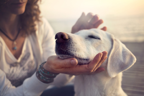 Soothing Anxious Pets with Reiki and Plant Energy
